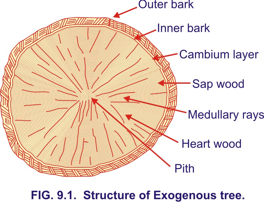 dating of events from tree growth and wood structure